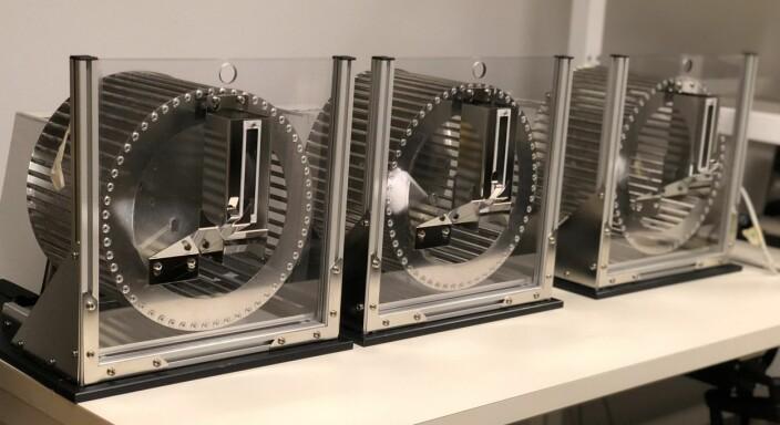 Løpehjulene brukes for å holde rottene våkne på ukurante tider på døgnet, for å teste toleransen for en endret døgnrytme.