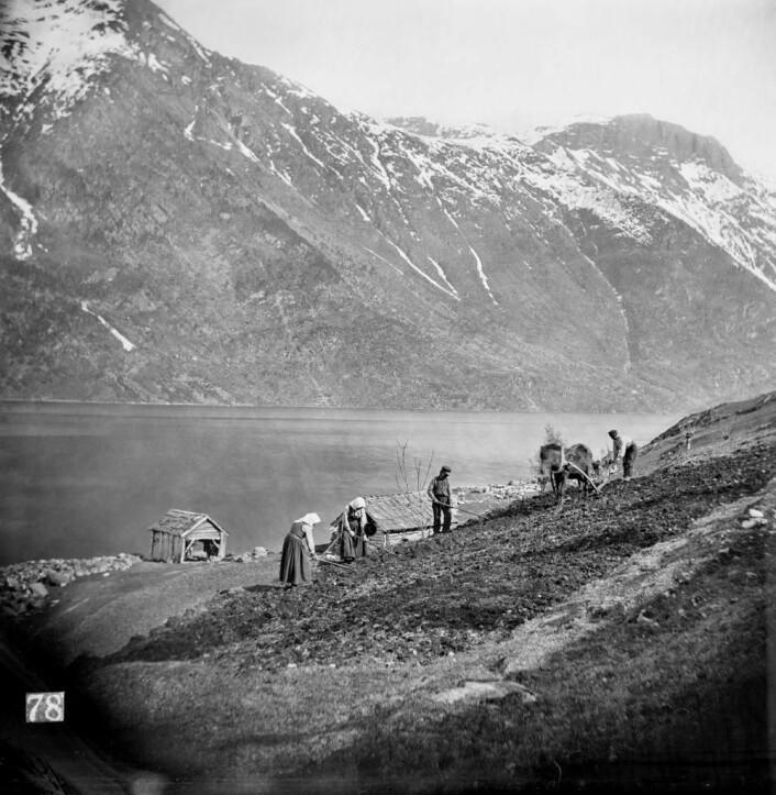 Små menneske i stort landskap, «Aanarbeide i Hardanger», fotografert av Knud Knudsen på Tokheim i 1864. Billedsamlingen UBB.